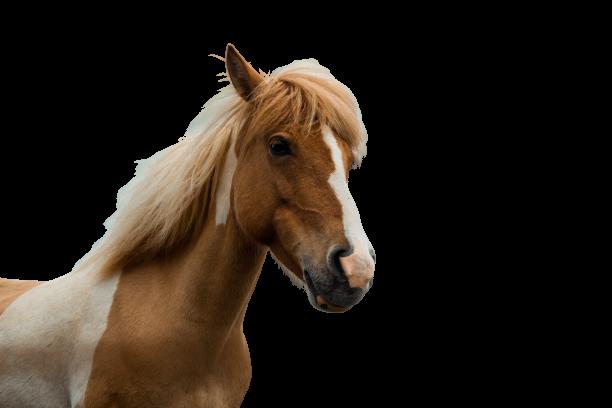 foyetcie - cheval